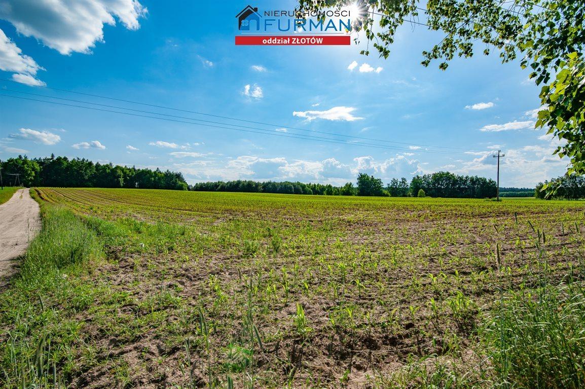Działka rolna na sprzedaż Witrogoszcz-Kolonia  183634m2 Foto 4