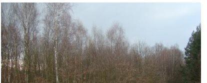 Działka leśna na sprzedaż Myszków, Będusz, Żelisławickiej  3125m2 Foto 3