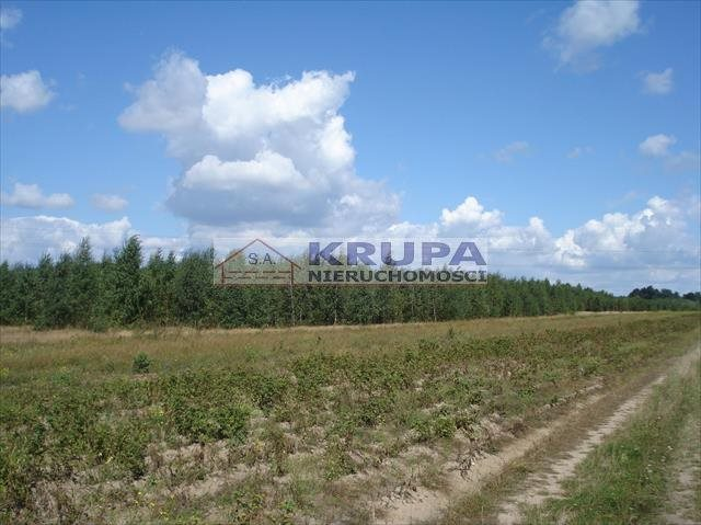 Działka rolna na sprzedaż Jachranka, Letnia (1)  970m2 Foto 5