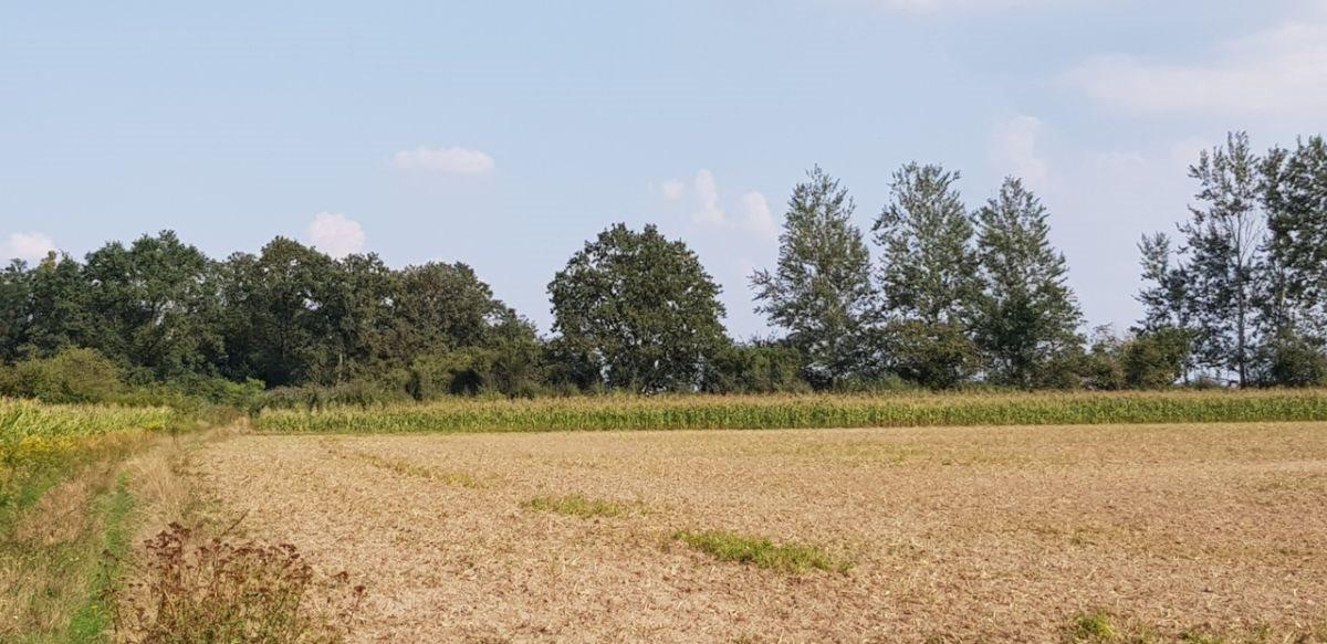 Działka rolna na sprzedaż Czernica  9534m2 Foto 5