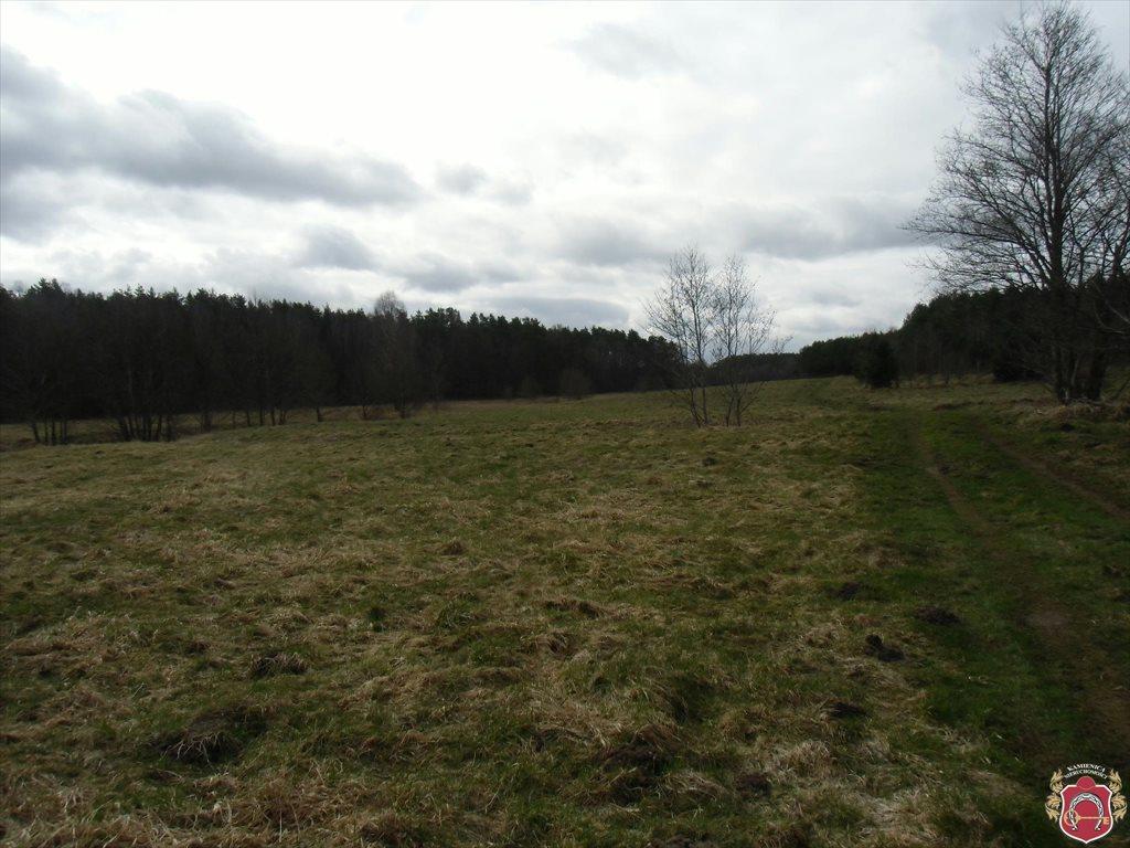 Działka rolna na sprzedaż Tawęcino  136800m2 Foto 4