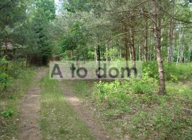 Działka leśna na sprzedaż Iły  4107m2 Foto 2