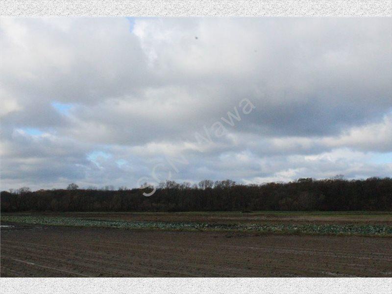 Działka rolna na sprzedaż Warszawa, Wilanów  4388m2 Foto 8