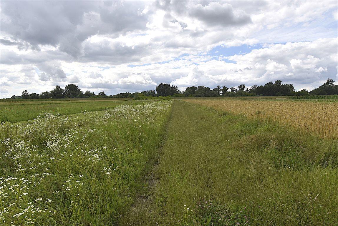 Działka rolna na sprzedaż Puławy  2900m2 Foto 2