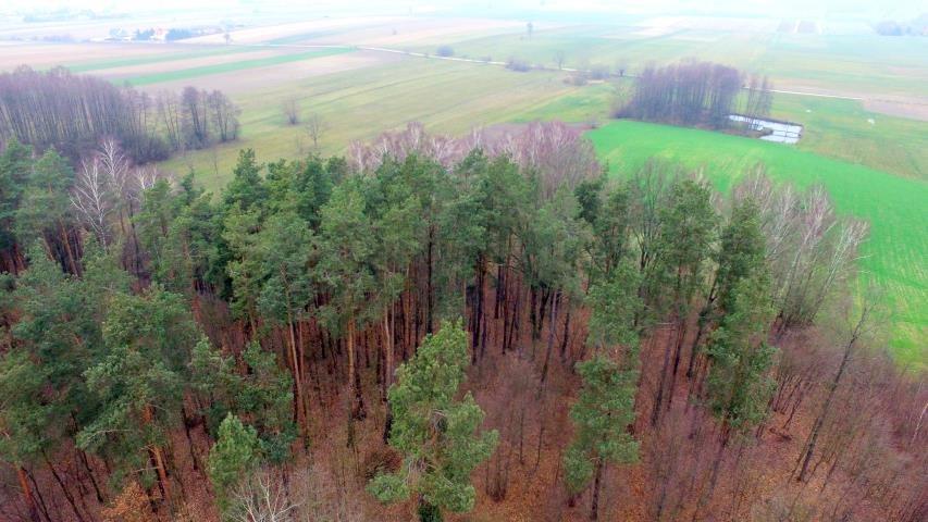 Działka leśna na sprzedaż Stary Cydzyn  8000m2 Foto 7