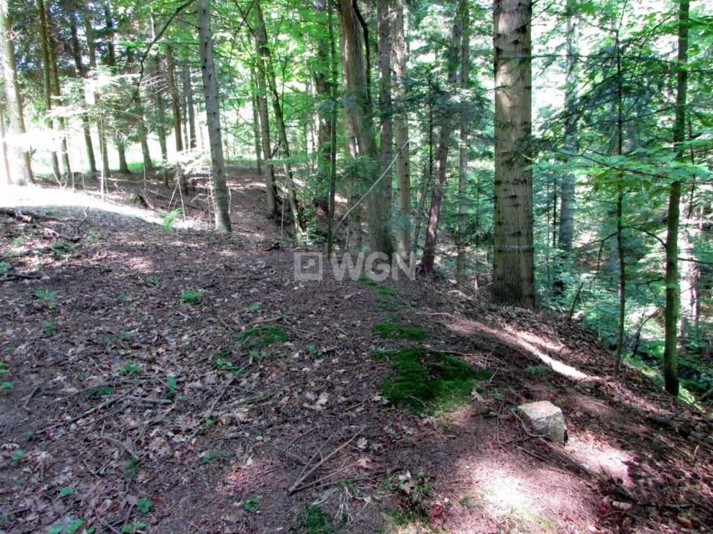 Działka leśna na sprzedaż Harta, Harta, Harta  14266m2 Foto 9