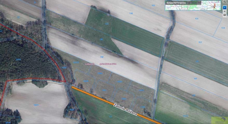 Działka rolna na sprzedaż Zielona Góra, Zatonie-Różana  26987m2 Foto 6