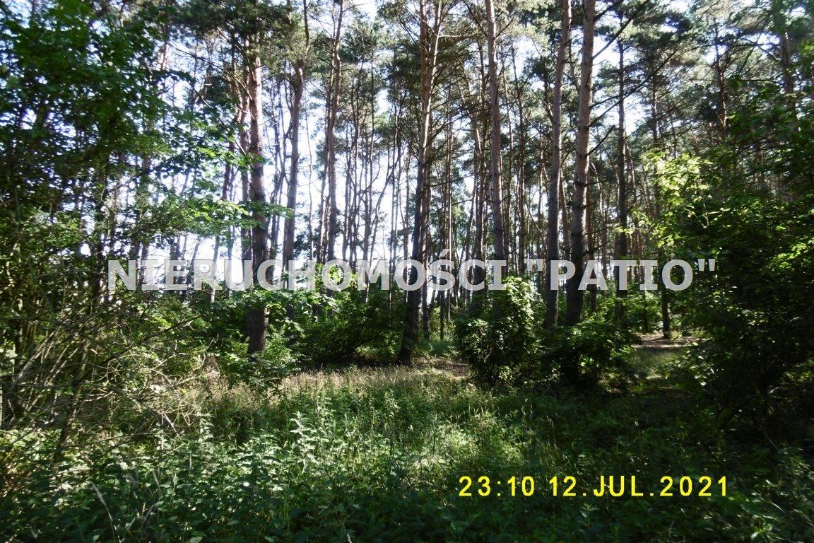 Działka leśna na sprzedaż Kórnik, Radzewo, Dworzyska  4700m2 Foto 2
