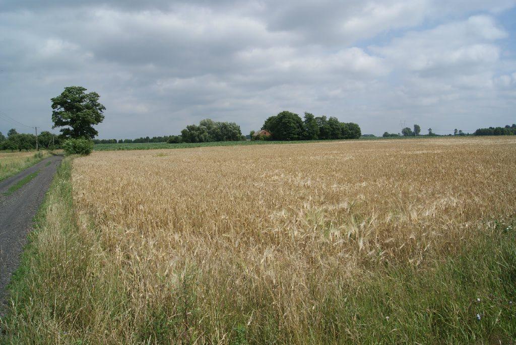 Działka rolna na sprzedaż Szczytno  27900m2 Foto 6