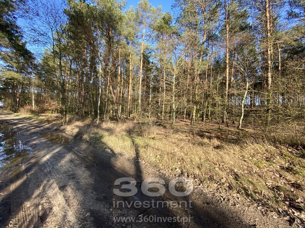 Działka leśna na sprzedaż Słonów  10800m2 Foto 5