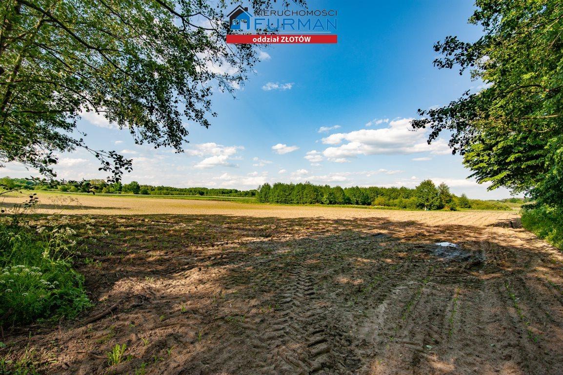 Działka rolna na sprzedaż Witrogoszcz-Kolonia  183634m2 Foto 3