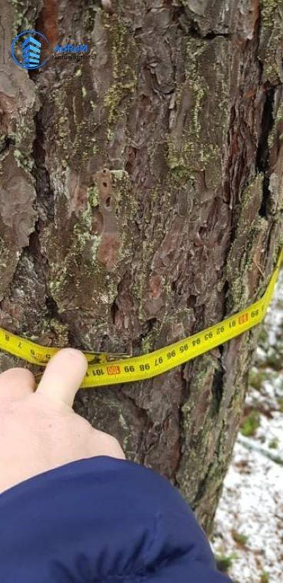 Działka leśna na sprzedaż Olszowa Droga  20000m2 Foto 6