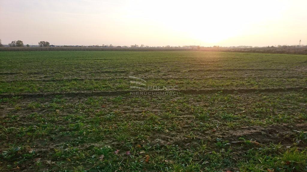 Działka rolna na sprzedaż Pęgów, Działka pod lasem w Pęgowie  3000m2 Foto 2