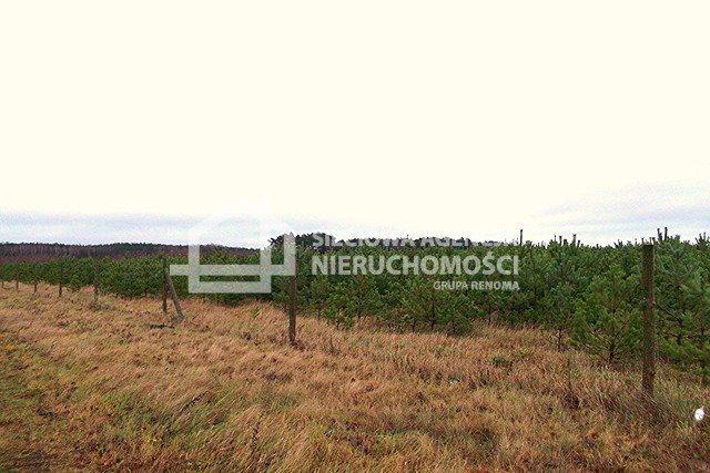 Działka leśna na sprzedaż Strzeczona  206330m2 Foto 5