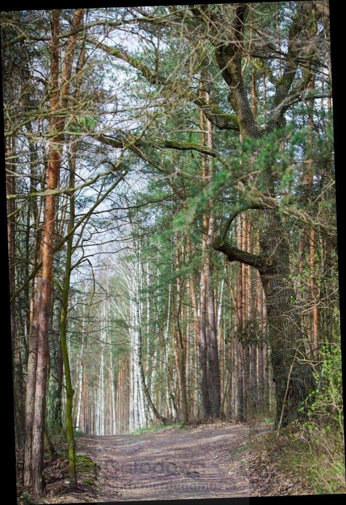 Działka leśna na sprzedaż Warszawa, Wawer  4135m2 Foto 2