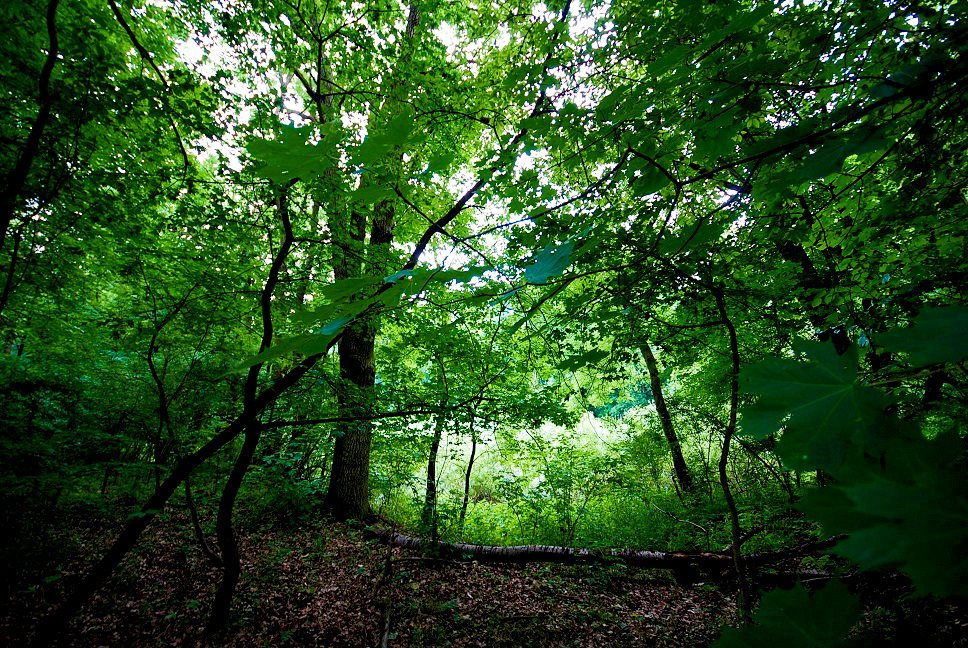 Działka leśna na sprzedaż Grodzanów  46000m2 Foto 9
