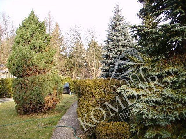 Dom na sprzedaż Otrębusy, Otrębusy  240m2 Foto 6