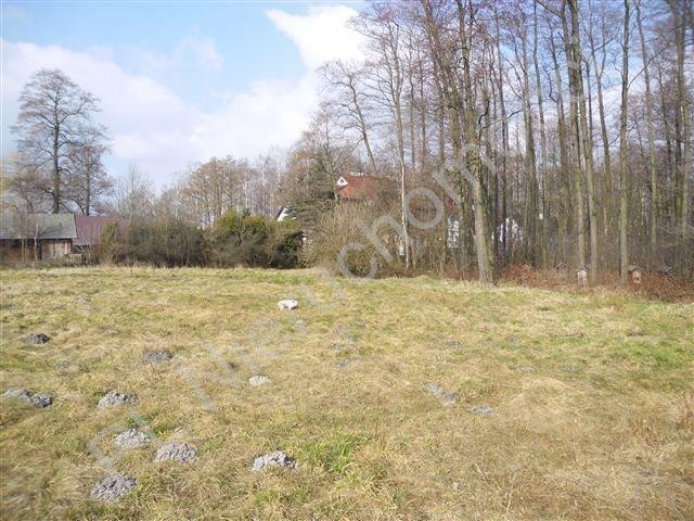 Działka siedliskowa na sprzedaż Olesin  9313m2 Foto 6
