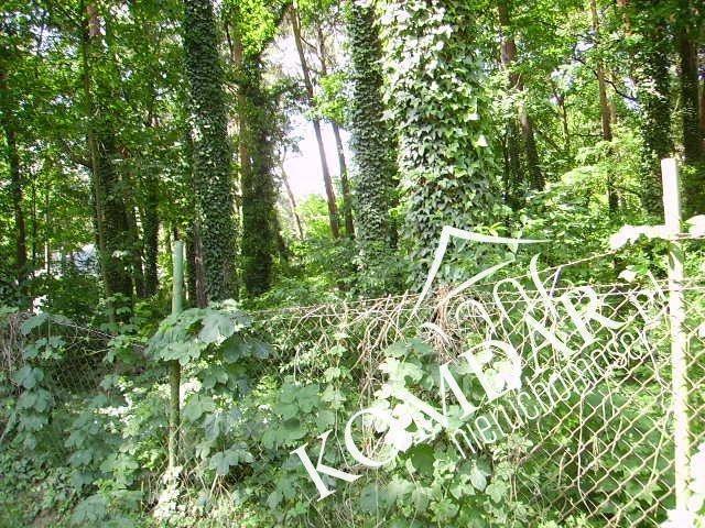 Działka leśna na sprzedaż Podkowa Leśna, Podkowa Leśna Wschodnia  3239m2 Foto 3