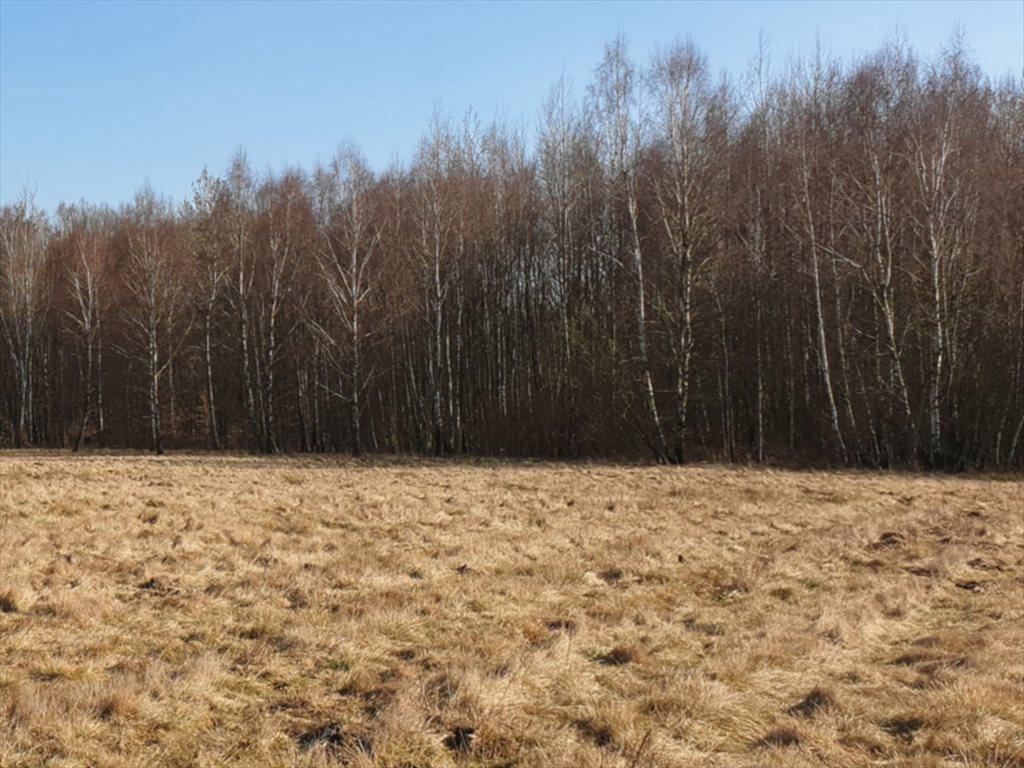 Działka rekreacyjna na sprzedaż Natolin, Nowosolna  4718m2 Foto 6
