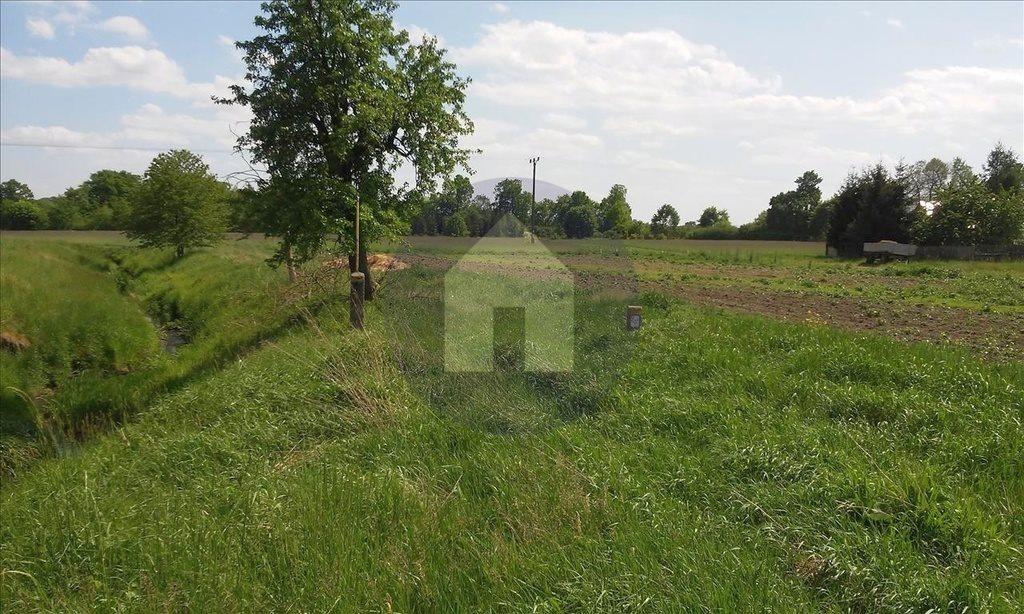 Działka siedliskowa na sprzedaż Szczytniki Nad Kaczawą  7300m2 Foto 4