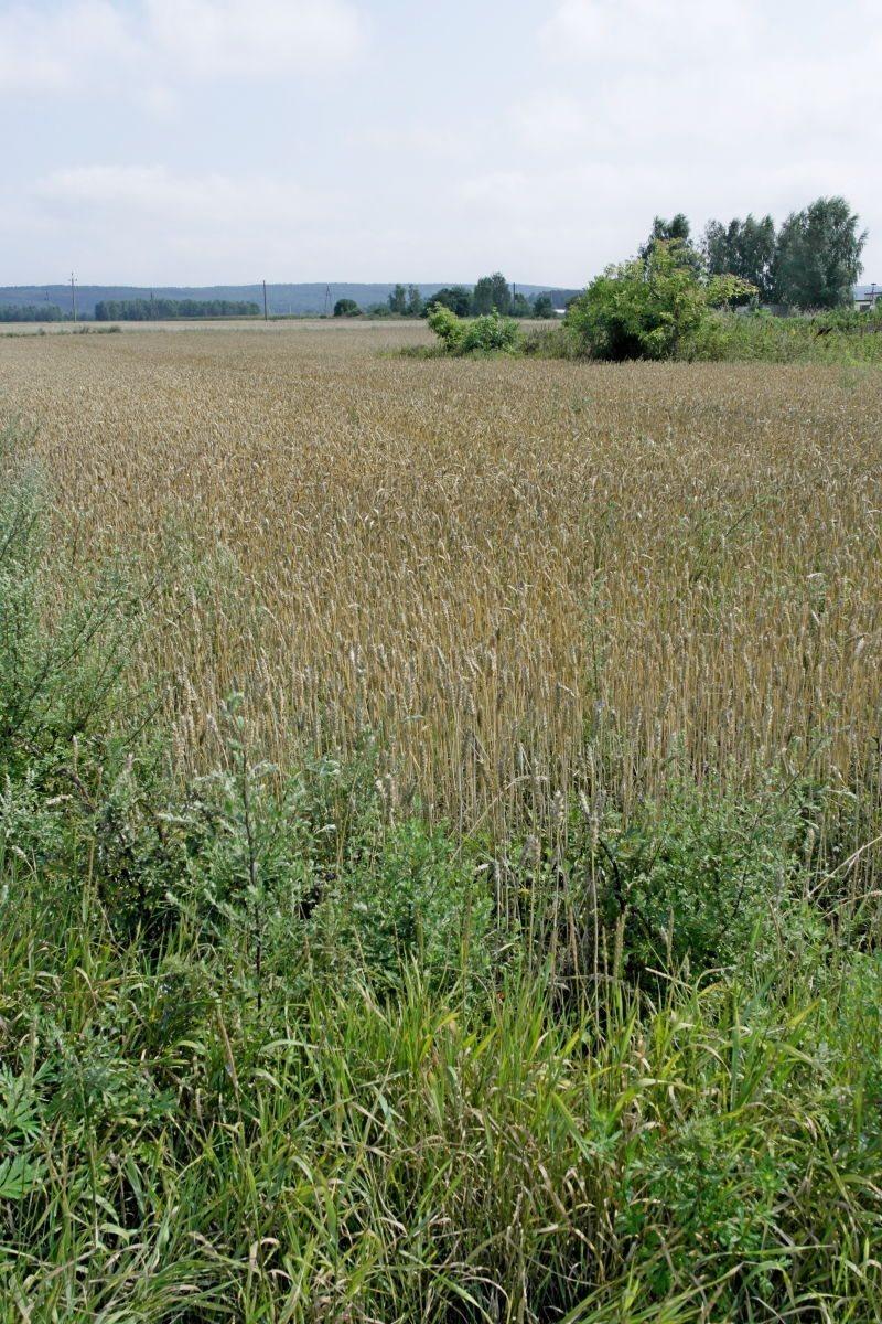 Działka rolna na sprzedaż Zakurzewo  1249m2 Foto 3