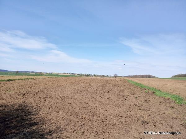 Działka rolna na sprzedaż Rogi  12000m2 Foto 5