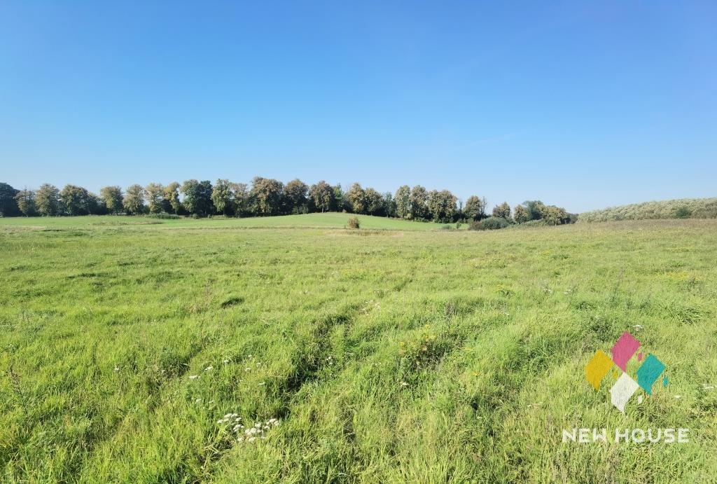 Działka rolna na sprzedaż Gołogóra  3109m2 Foto 2