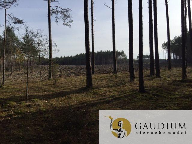 Działka leśna na sprzedaż Klocek  60000m2 Foto 7