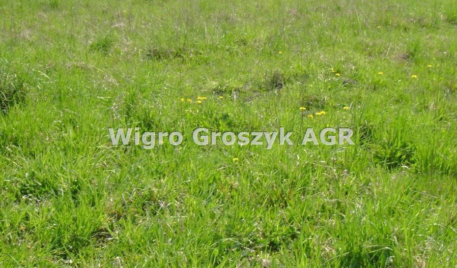 Działka rolna na sprzedaż Wojcieszyn  1200m2 Foto 1