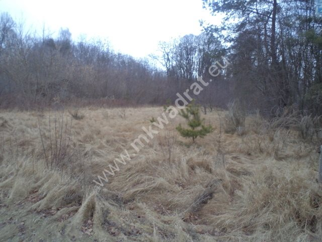 Działka leśna na sprzedaż Raducz  8600m2 Foto 4