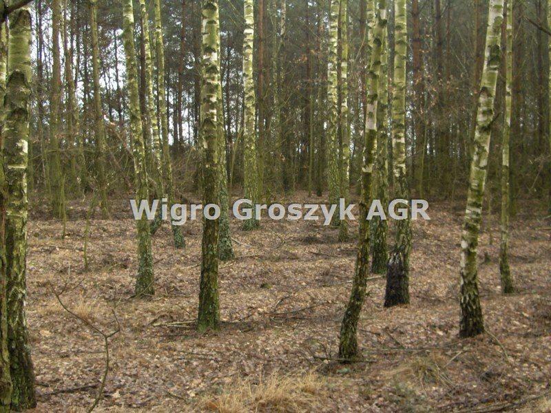 Działka leśna na sprzedaż Stanisławów  3076m2 Foto 2