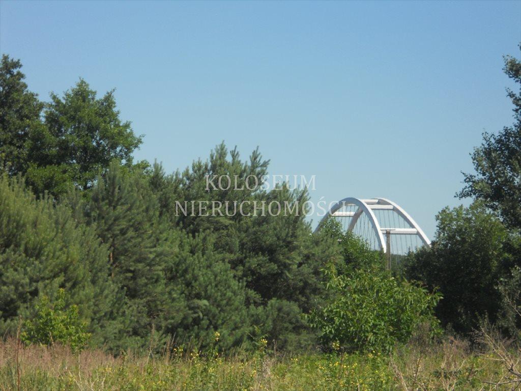 Działka siedliskowa na sprzedaż Toruń  6814m2 Foto 7
