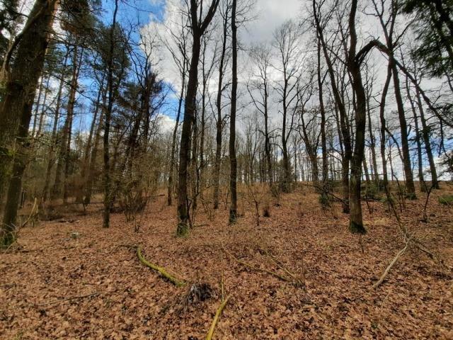 Działka leśna na sprzedaż Grądzkie  1404m2 Foto 5