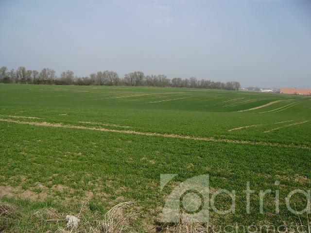 Działka rolna na sprzedaż Ustowo  20000m2 Foto 4