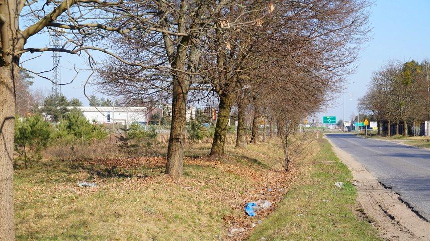 Działka inwestycyjna na sprzedaż Dąbrowa, Bukowska/Pasjonatów  3806m2 Foto 7