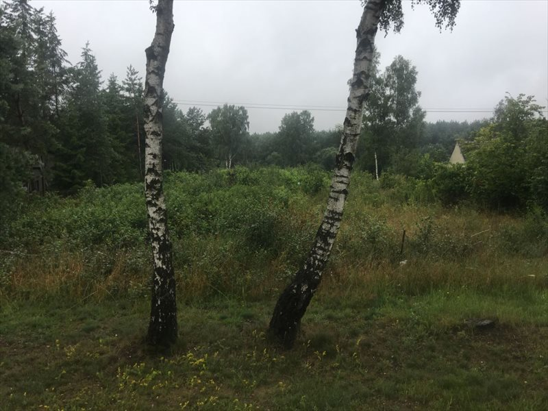 Działka budowlana na sprzedaż Jerzykowo  5200m2 Foto 1