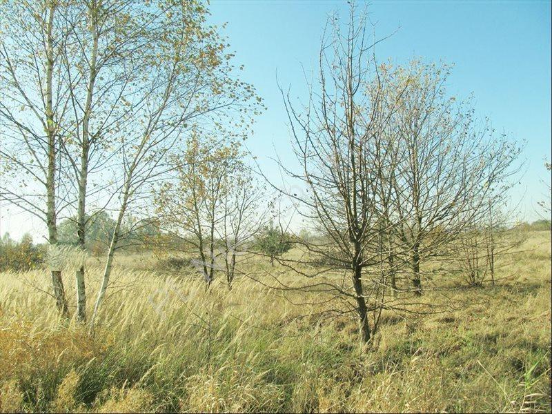 Działka rolna na sprzedaż Tyborów  4591m2 Foto 7