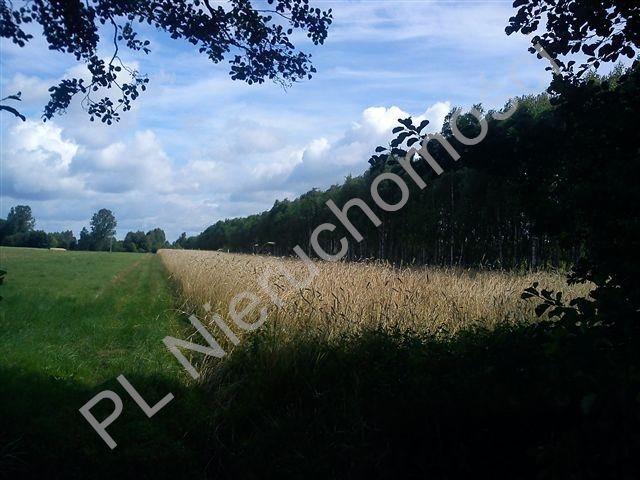 Działka rolna na sprzedaż Stanisławów  18000m2 Foto 2