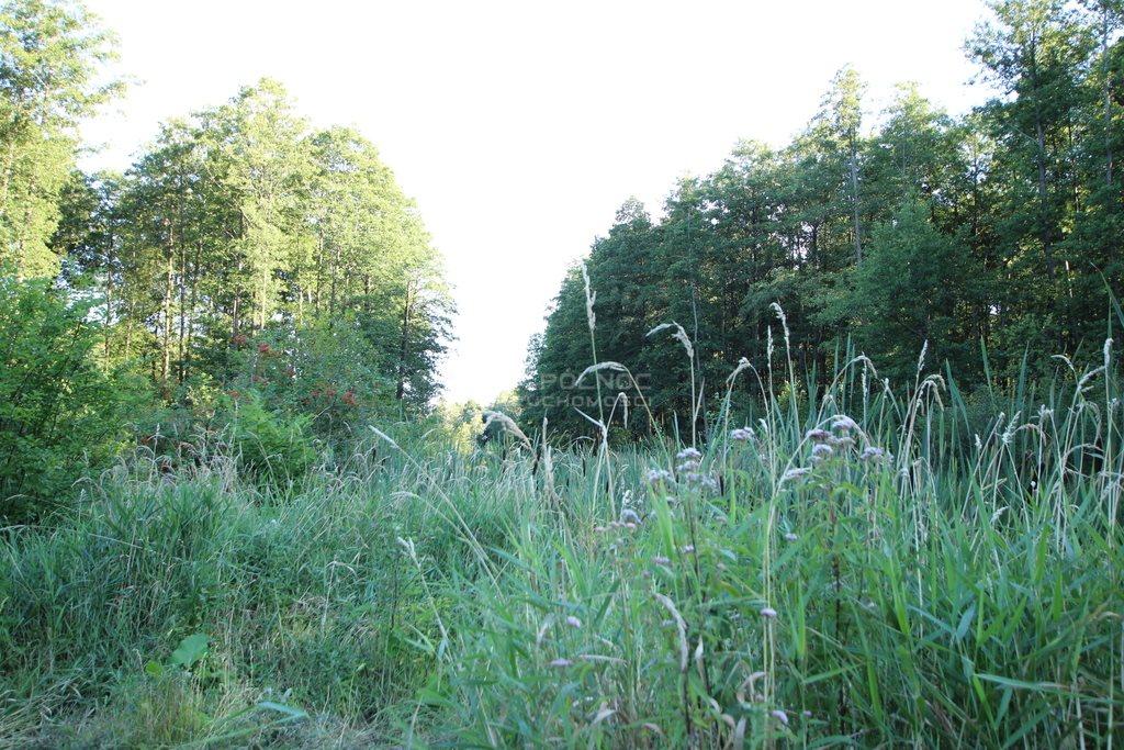 Działka leśna na sprzedaż Daniszewo  7000m2 Foto 6