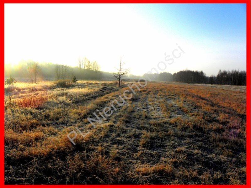 Działka rolna na sprzedaż Stanisławów  12000m2 Foto 2