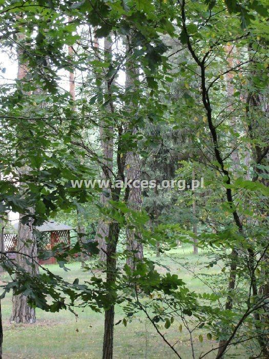 Lokal użytkowy na sprzedaż Baniocha  1000m2 Foto 8