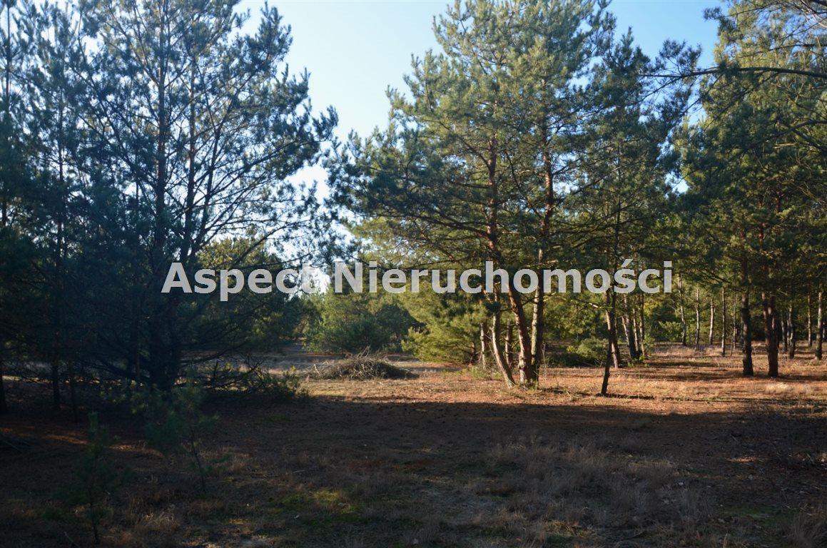 Działka leśna na sprzedaż Suchcice  12200m2 Foto 5
