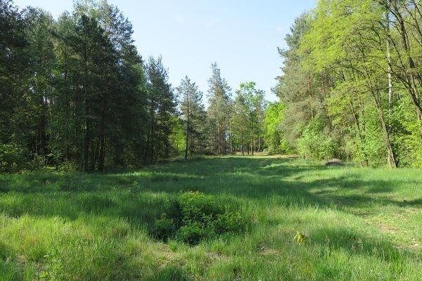 Działka rolna na sprzedaż Słupica  8100m2 Foto 1