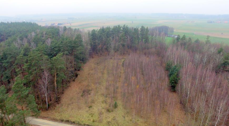 Działka leśna na sprzedaż Stary Cydzyn  8000m2 Foto 6