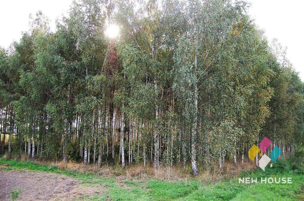 Działka leśna na sprzedaż Barcikowo  41800m2 Foto 6