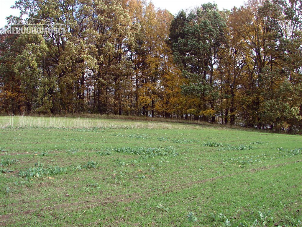Działka rolna na sprzedaż Małdyty, ul. Ostródzka  134077m2 Foto 5