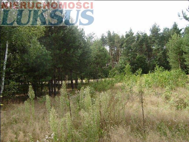 Działka rolna na sprzedaż Mirowice  5000m2 Foto 2