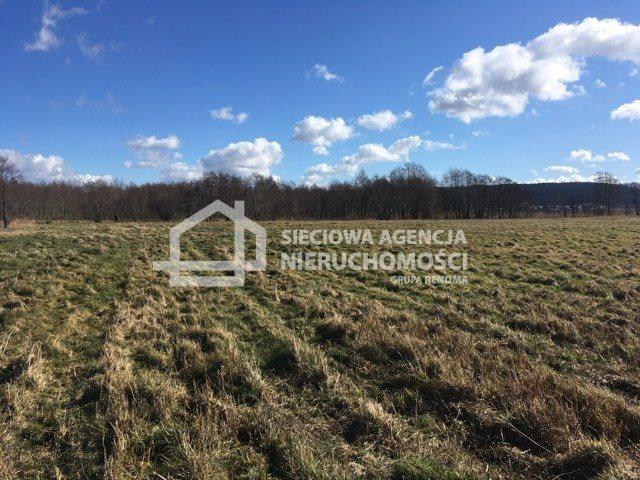 Działka rolna na sprzedaż Leśnice  40000m2 Foto 6