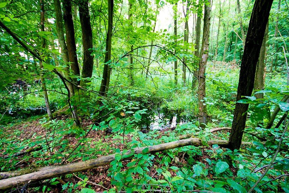 Działka leśna na sprzedaż Grodzanów  46000m2 Foto 10